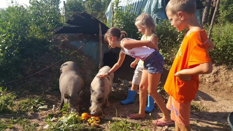 Learning with pigs